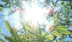 【紫外線】頭皮が浴びる量は肌の3倍以上!