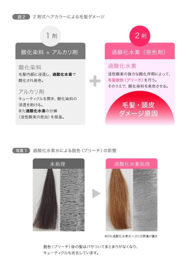 【パーマ&カラー】化学変化で髪の構造に作用 図2