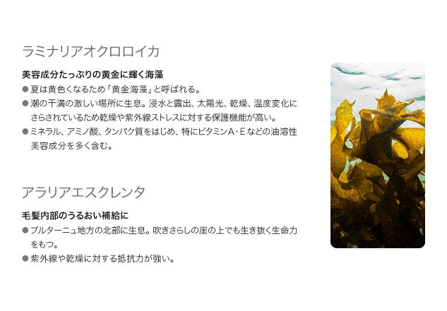 海藻エキスのうるおい力に注目! 写真