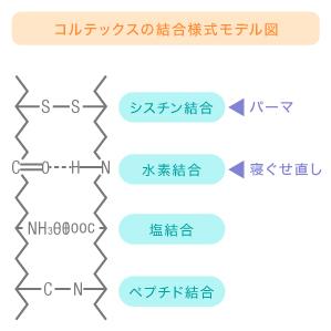 コルテックスの結合様式モデル図