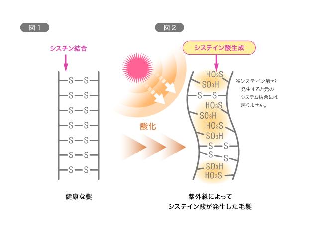 【紫外線】頭皮が浴びる量は肌の3倍以上! 図