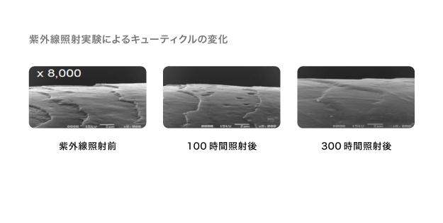 【紫外線】頭皮が浴びる量は肌の3倍以上! 写真